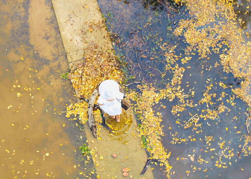 Rú Chá Huế mùa thay lá đẹp tựa như khu vườn cổ tích thumbnail