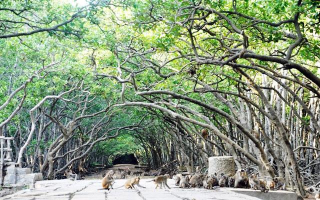 Không gian sống của những chú khỉ trên đảo khỉ Cần Giờ