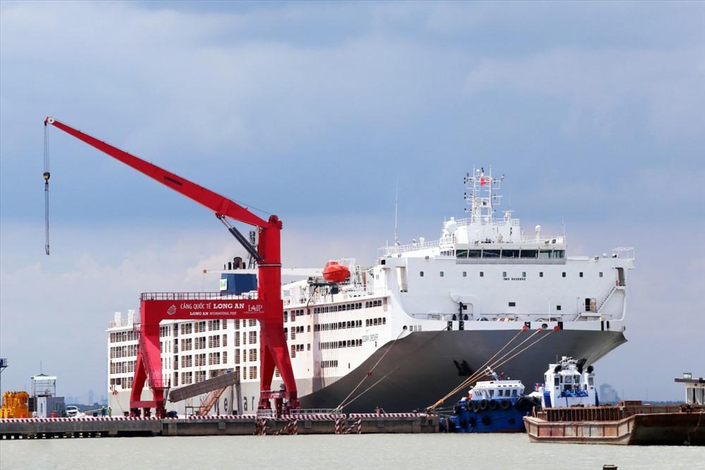 Tàu Ocean Drover - Một trong những tàu chở động vật sống lớn nhất thế giới tại cảng biển Tân Tập