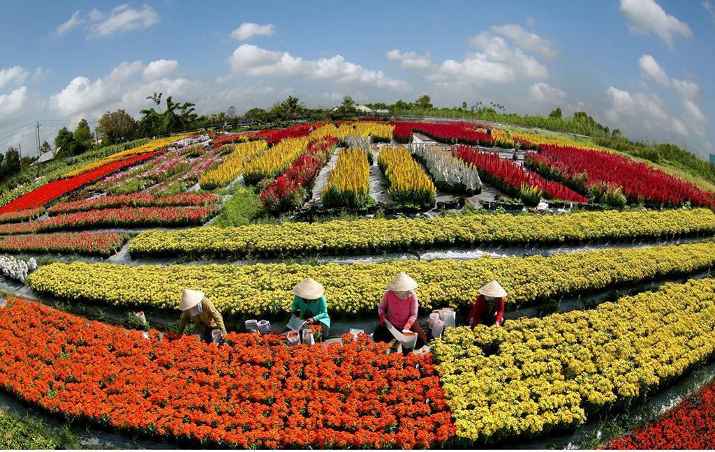 Du hí làng hoa Sa Đéc đầy màu sắc.