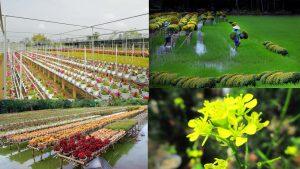 Check in cực hot và đầy màu sắc với làng hoa Sa Đéc post image