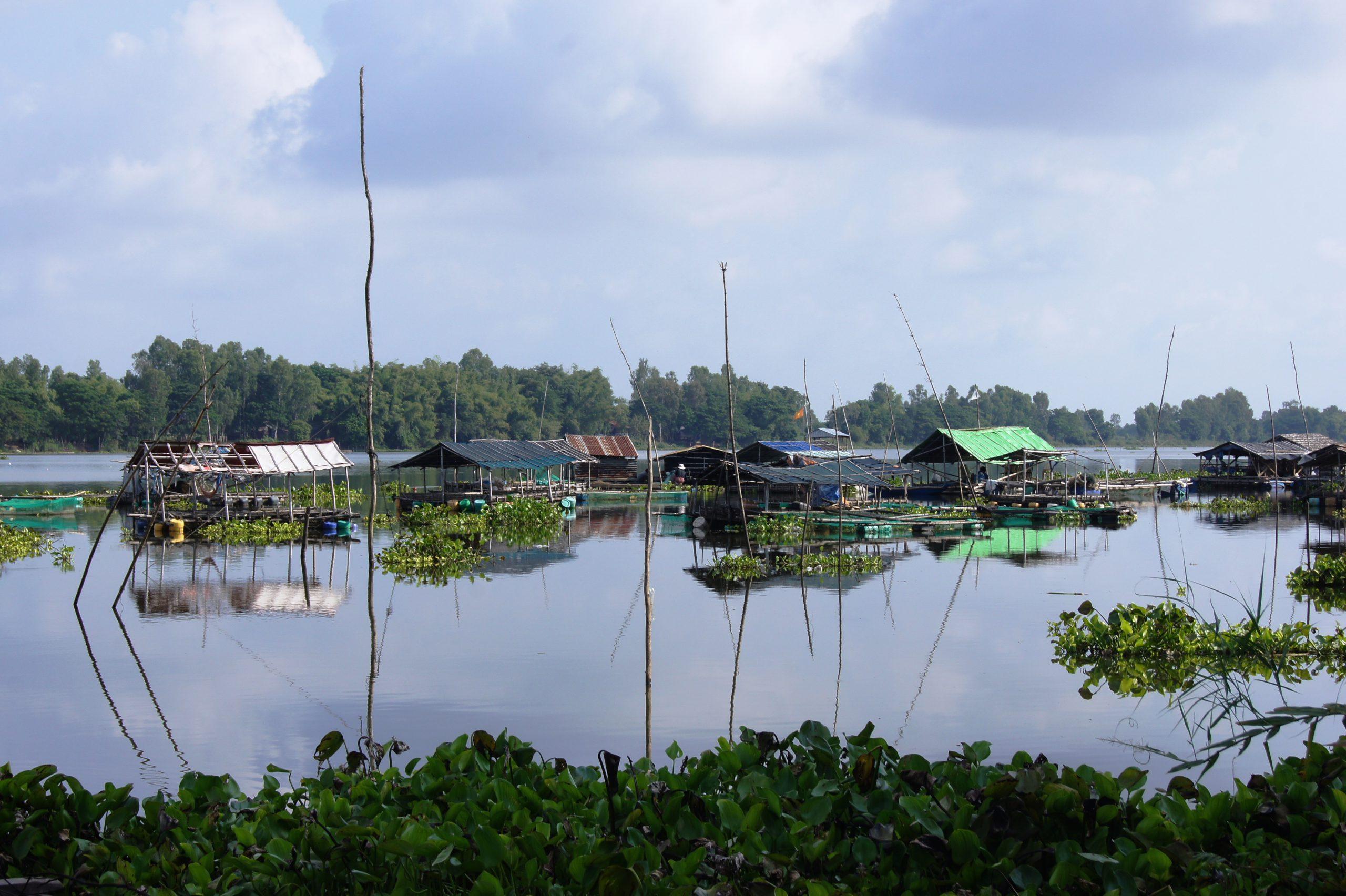 Đến búng Bình Thiên và tham gia các hoạt động như bắt cá linh, hái bông điên điển,...