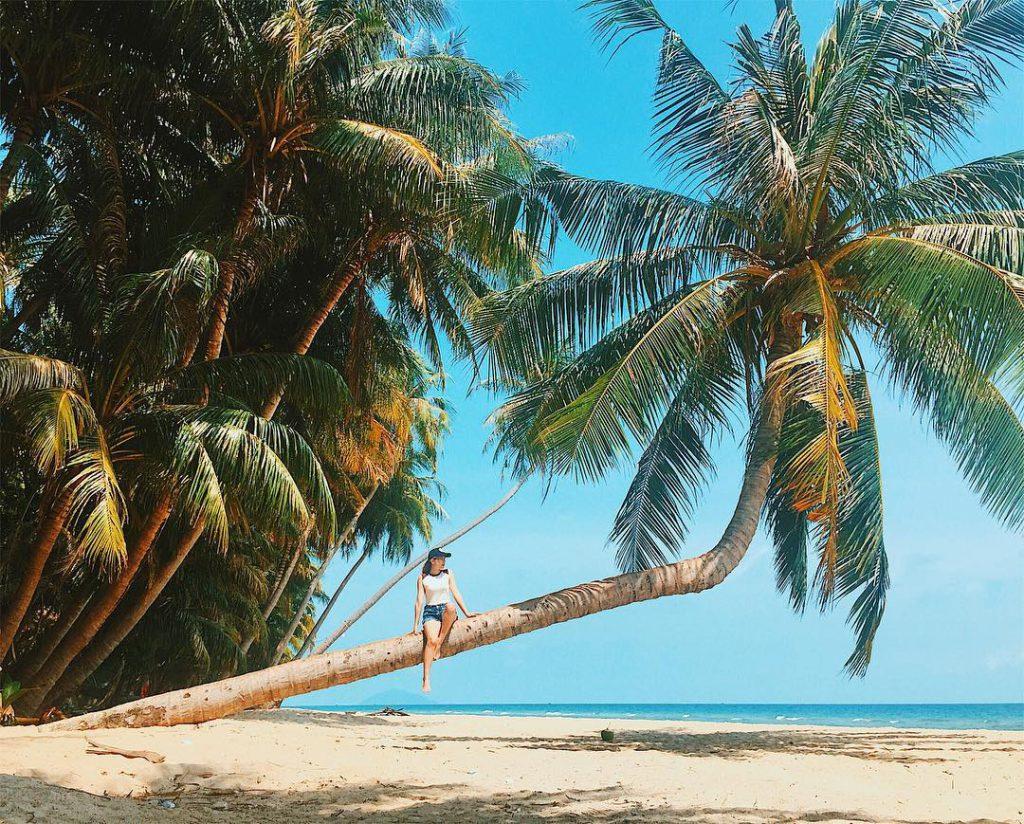 Những hàng dừa cao ngút ngả mình về phía bờ biển.