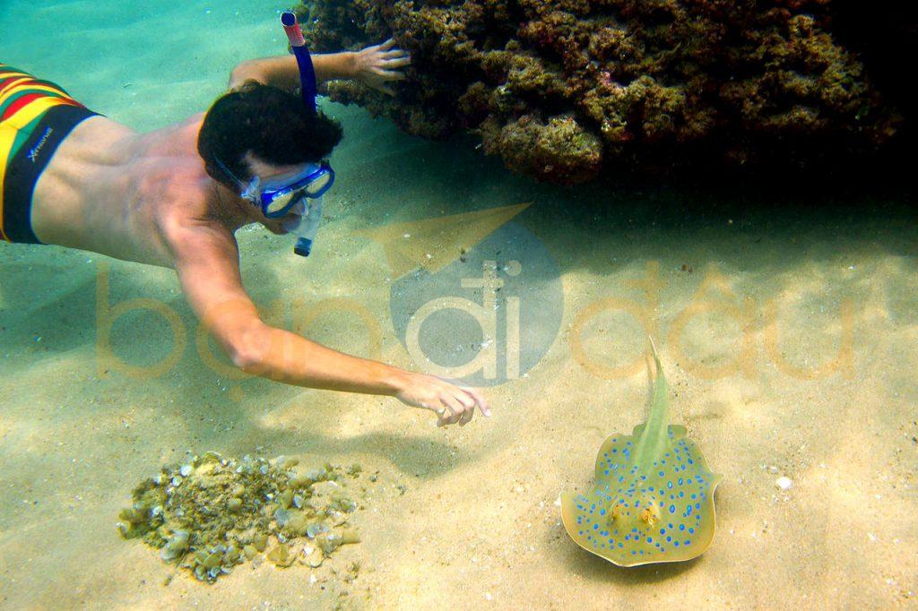 Lặn ngắm san hô tại Bắc đảo - lá phổi xanh của Phú Quốc.