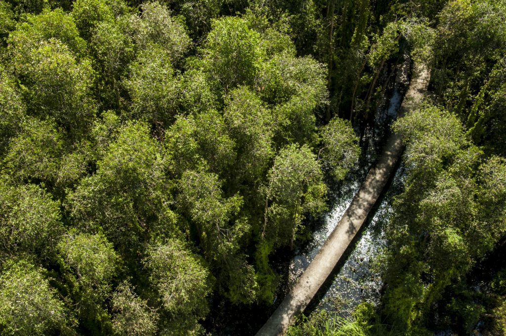 Một màu xanh bao trùm cả khu rừng.