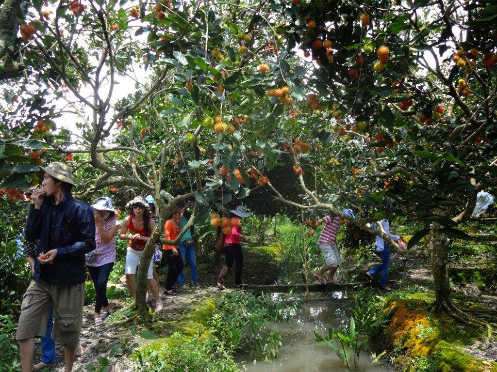 Vườn trái cây Trung An Củ Chi.