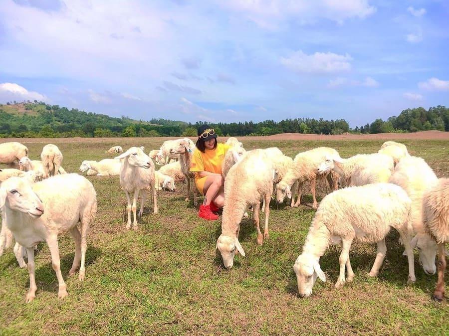 Đồng Cừu Vũng Tàu (Ảnh: st)